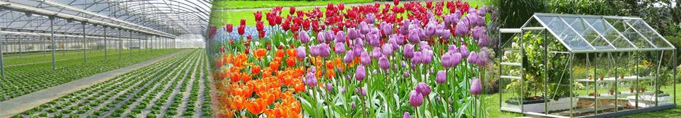 termómetro analógico de tierra para su uso en invernaderos, jardines o plantaciones de cualquier tipo
